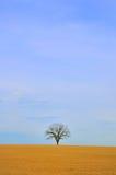 干燥结构树 库存图片