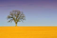 干燥结构树 免版税库存图片