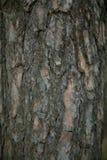 干燥老树皮垂直 免版税库存照片
