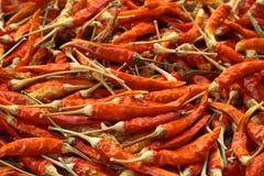 干燥胡椒红色 图库摄影