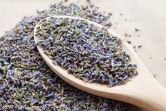 干燥自然淡紫色花 免版税库存图片