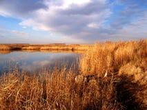 干燥芦苇和不生叶的树在秋天河,芦苇茎在沼泽反对阳光 免版税库存图片