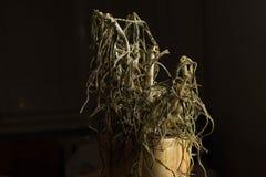 干燥花上面在葡萄酒口气,背景纹理,平的位置概念的 库存图片