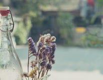 干燥花和玻璃瓶 免版税图库摄影