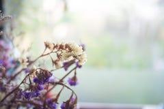 干燥花在焦点 库存照片