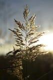 干燥花在Vacaresti自然公园,布加勒斯特,罗马尼亚 库存照片