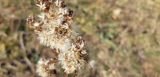 干燥蓟 在领域的干草 库存照片