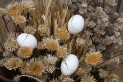 干燥蛋壳工厂 免版税库存图片