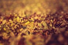 干燥铁锈色下落的秋叶 免版税库存图片