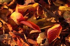 干燥陆运叶子 库存图片