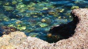 干燥青苔和海 股票视频