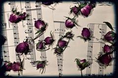 干燥音乐注意玫瑰花蕾 库存照片