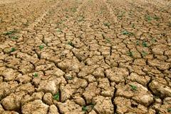 干燥领域 图库摄影