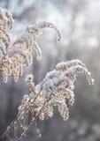 干燥高草覆盖与雪 免版税库存图片