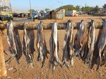 干燥鱼卡特海滩孟买 免版税库存图片