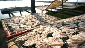 干燥鱼肉星期日 影视素材