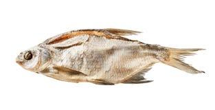 干燥鱼 免版税库存照片