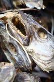 干燥鱼 库存图片