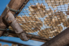 干燥鱼34 免版税库存照片