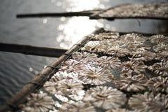 干燥鱼36 库存图片