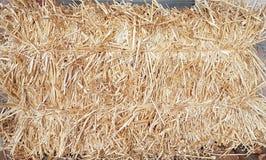 干燥麦子秸杆在夏天 免版税图库摄影
