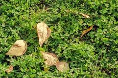 干燥黄色下落的秋叶在绿草放置 库存图片