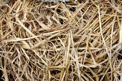 干燥黄色干草,干草背景纹理  免版税图库摄影