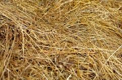 干燥黄色干草,干草背景纹理  库存图片