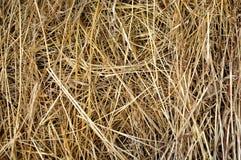 干燥黄色干草,干草背景纹理  免版税库存照片