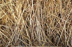干燥黄色干草,干草背景纹理  库存照片