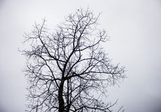 干燥死亡树 库存图片