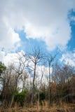 干燥结构树 图库摄影