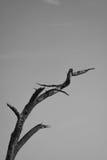 干燥结构树 免版税图库摄影