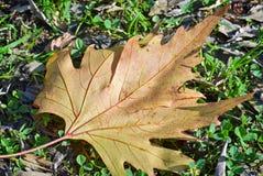 干燥黄色叶子 库存图片