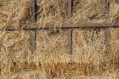 干燥黄色干草 库存照片