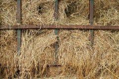 干燥黄色干草 免版税库存照片