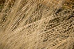 干燥黄色草在草甸 背景 库存照片