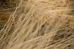 干燥黄色草在草甸 背景 免版税库存图片