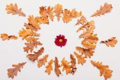 干燥黄色离开以圈子的形式与一朵红色花 库存照片