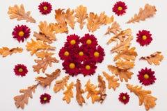 干燥黄色离开以圈子的形式与红色chrysanthemu 库存照片