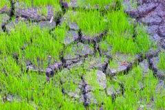 干燥破裂的土地表面和草 免版税图库摄影