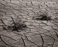 干燥破裂的土壤和植物 图库摄影