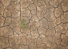 干燥破裂的土壤 免版税库存照片