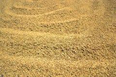 干燥稻 免版税库存照片