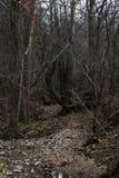 干燥Creekbed 免版税库存照片