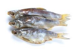 干燥vobla鱼 免版税库存图片