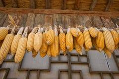 干玉米在房子屋顶垂悬  免版税图库摄影