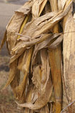 干玉米壳背景  免版税库存图片