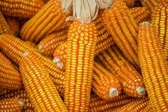 干玉米背景和纹理 免版税库存照片