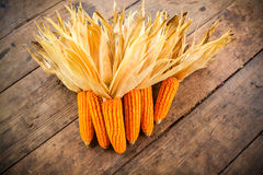 干玉米静物画  库存图片